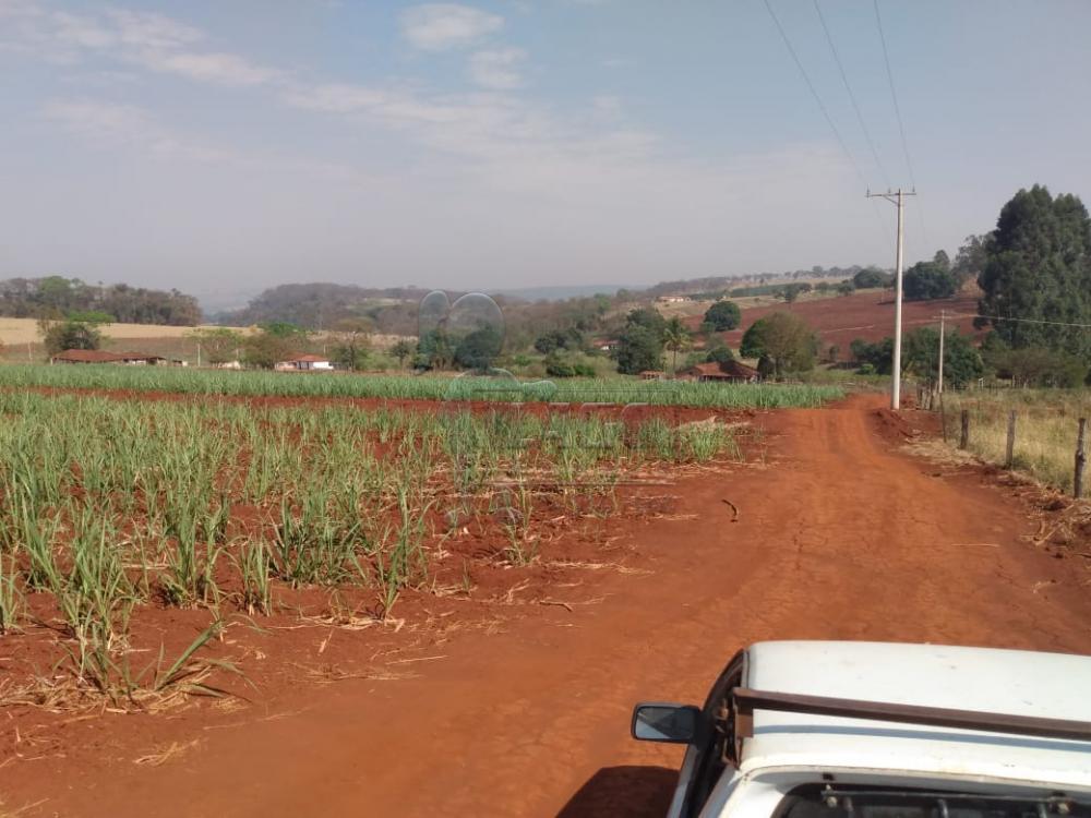 Comprar Rurais / Área em Cajuru apenas R$ 325.000,00 - Foto 2