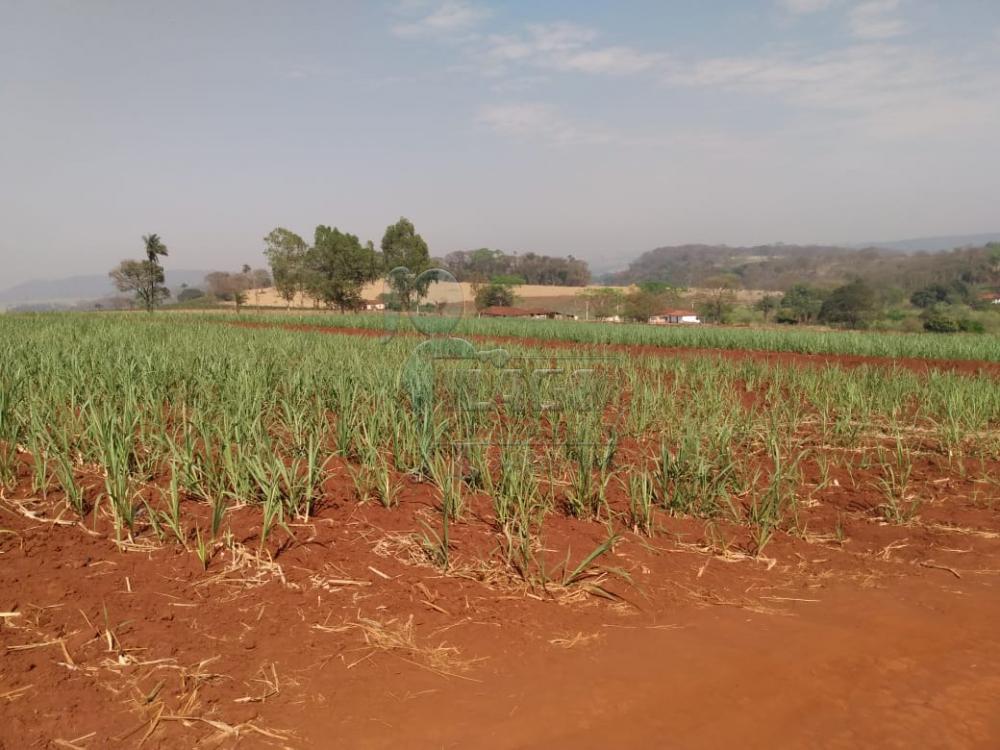 Comprar Rurais / Área em Cajuru apenas R$ 325.000,00 - Foto 3