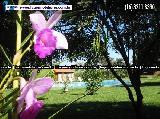 Brodowski Boa Vista comercial Venda R$2.500.000,00 1 Dormitorio 25 Vagas Area do terreno 48400.00m2 Area construida 1650.00m2